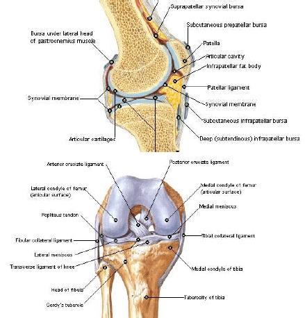 lg artroza genunchiului artroză dureri de umăr